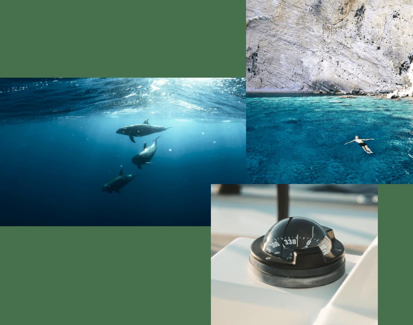 dauphins, homme qui fait la place et matériel à bord